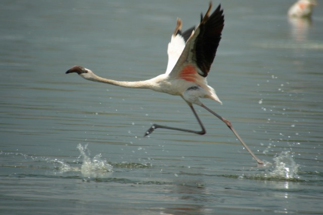 Flamingo Lake Bogoria Kenya